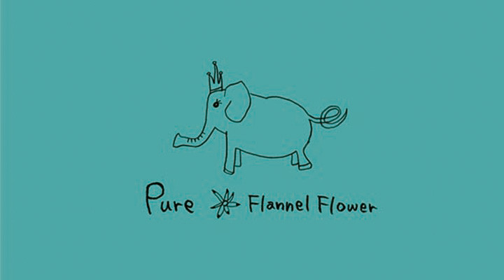 Flannel Flower – Pure